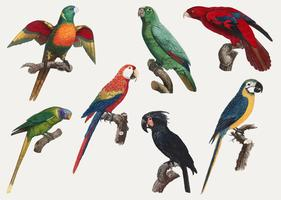 Macaws vintage design
