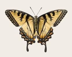 Vintage illustratie van vlinder