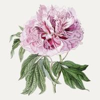 Rosa trädponny