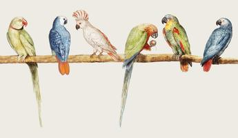 Parrot variety in vintage style