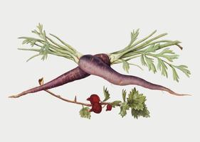 Zanahoria y grosella roja en estilo vintage