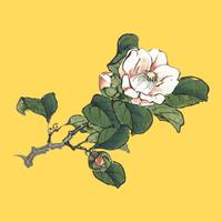 Camelia by K?no Bairei (1844-1895). Digitally enhanced from our own original 1913 edition Bairei Gakan.