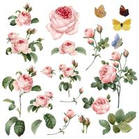 Handdragen rosa rosor vektor samling