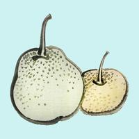 Asian pears by K?no Bairei (1844-1895). Digitally enhanced from our own original 1913 edition of Bairei Gakan.