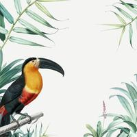 Tropical parrot frame