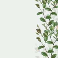 Grüner botanischer Rahmen