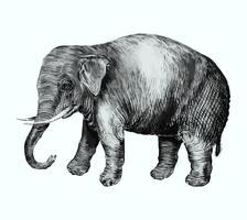 Elefant im Vintage-Stil