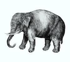 Elephant in vintage style