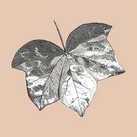 Vintage leaf illustration