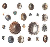 Variedades de caracoles de mar