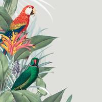 Macaw tropisk mockup illustration