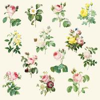 Set schöne blühende Rosen