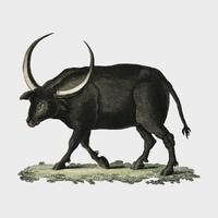 Bilderbuch fur Kinder by Georg Melchior Kraus, published in 1790-1830, an illustration of long horned buffalo. Digitally enhanced by rawpixel.