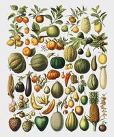 En vintageillustration av ett brett utbud av frukter och grönsaker från boken Nouveau Larousse Illustre (1898), av Larousse, Pierre, Augé och Claude, förstärkt digitalt av rawpixel.