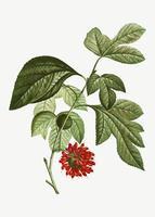 Flor roja de papel mullberry