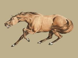 Illustration av ljusbrun häst från Sporting Sketches (1817-1818) av Henry Alken (1784-1851). Digitalt förbättrad av rawpixel.