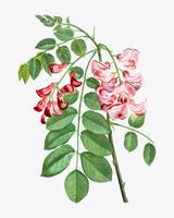 Robinier se levantó en flor