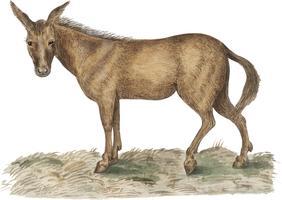 Mule in vintage style