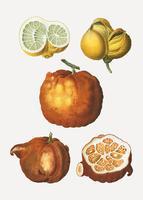 Tipi di agrumi