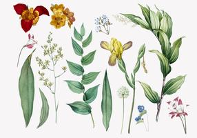 Set of flowers and plant illustrations