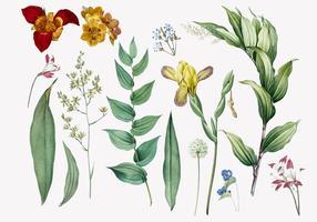 Set Blumen und Pflanzenabbildungen