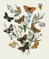 Ilustración de mariposas en las flores