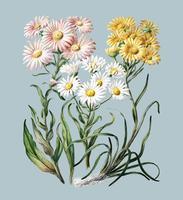 Antikväxter Nya Zeelands snölandskap ritade av Sarah Featon (1848 - 1927). Digitalt förbättrad av rawpixel.