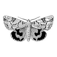 Illustration de papillon