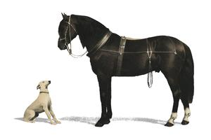 Orloffer (Orloff Horse) by Emil Volkers (1880), an illustration of a black horse and a white dog. Digitally enhanced by rawpixel.