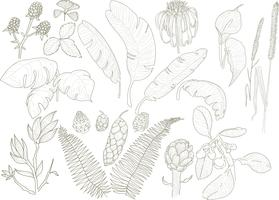 Illustration of different leaf and plant species