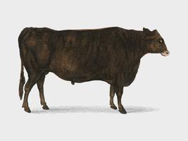 Animerad Natur (1855), ett porträtt av en ox. Digitalt förbättrad av rawpixel.