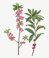 Febrero flores Daphne