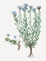 Flores de margarita globo