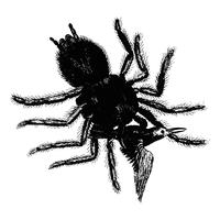 Ilustración de la araña