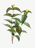 Flores de madreselva del norte del arbusto