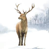 Veado macho pintado pelo vetor de aquarela