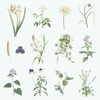 Mixed summer flowers