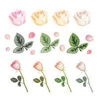 Illustration de dessin fleur rose blanche