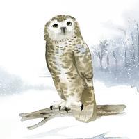 Snöig uggla i vinter akvarell stil vektor