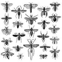 Illustration uppsättning olika insekter