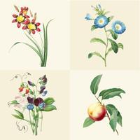 Set van prachtige bloeiende wilde bloemen