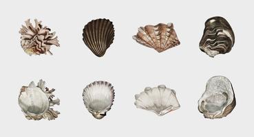 Diversi tipi di molluschi illustrati da Charles Dessalines D 'Orbigny (1806-1876). Miglioramento digitale della nostra edizione del 1892 di Dictionnaire Universel D'histoire Naturelle.