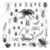 Illustrationssatz verschiedene Insekten