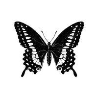 Illustration d'un papillon