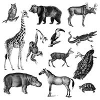 Ilustraciones vintage de animales