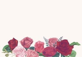 Illustratie van rozen die op witte achtergrond worden geïsoleerd