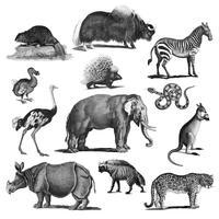 Vintage illustrationer av djur