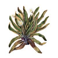Antikväxter Bergdisyck dras av Sarah Featon (1848 - 1927). Digitalt förbättrad av rawpixel.