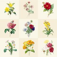 Set med vackra blommande vildblommor