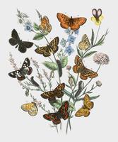 Illustration of butterflies on flowers